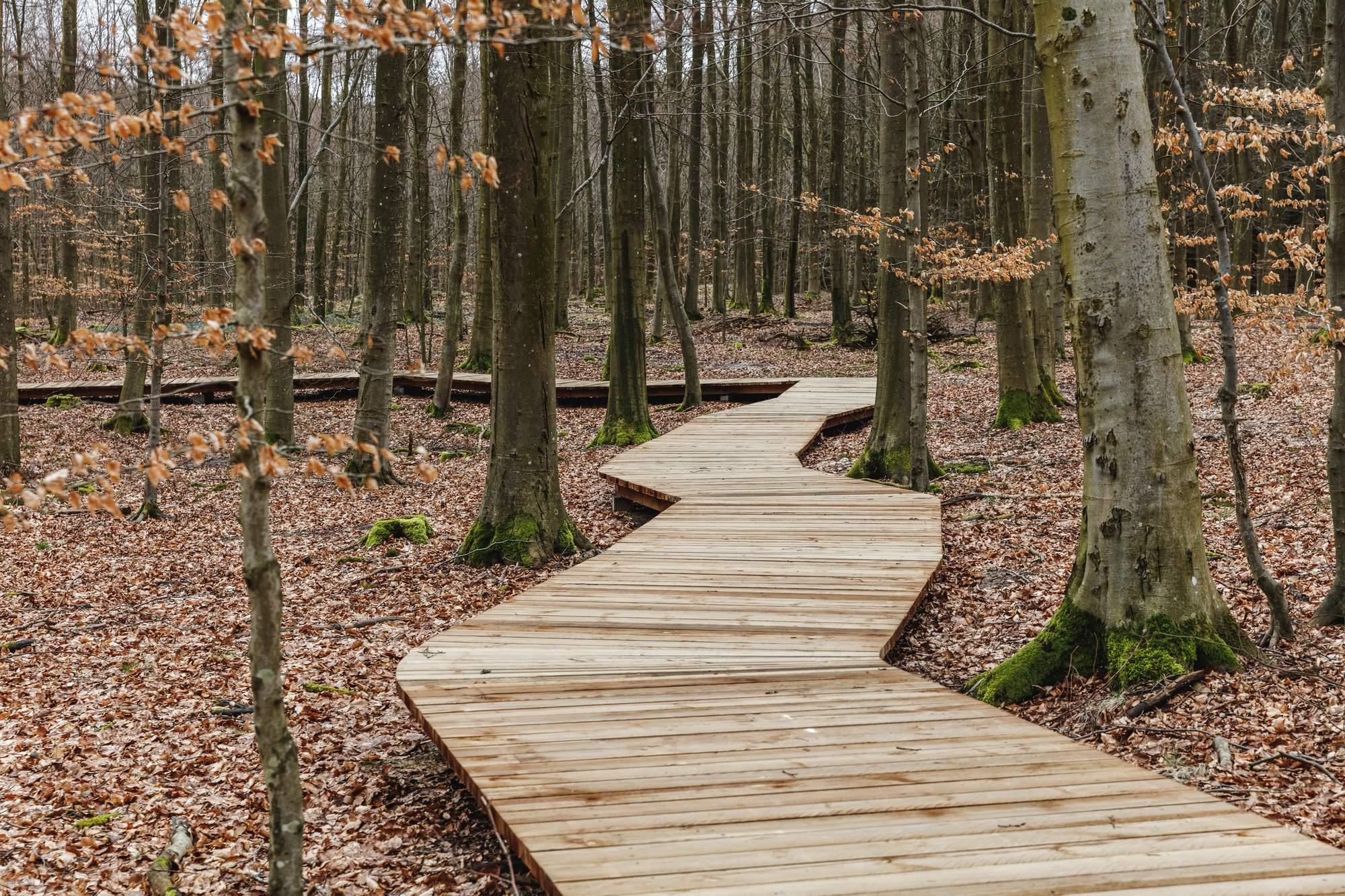 Обзорная башня в заповедном лесу, Дания